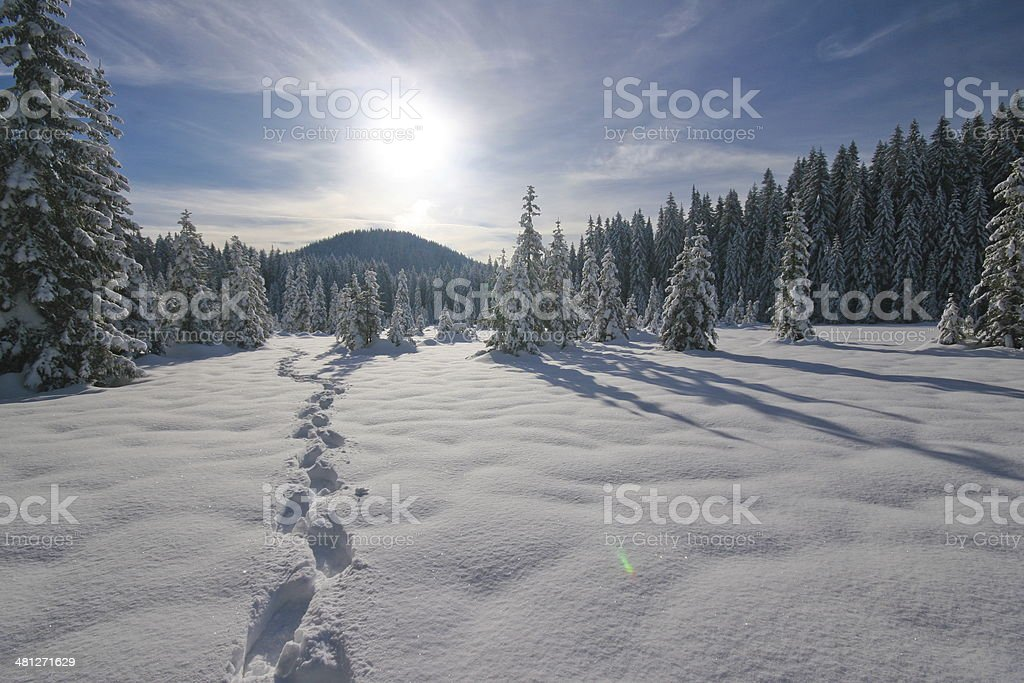 footsteps stock photo