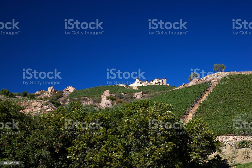 For Sale Home on a Hillside of Grape Vines stock photo