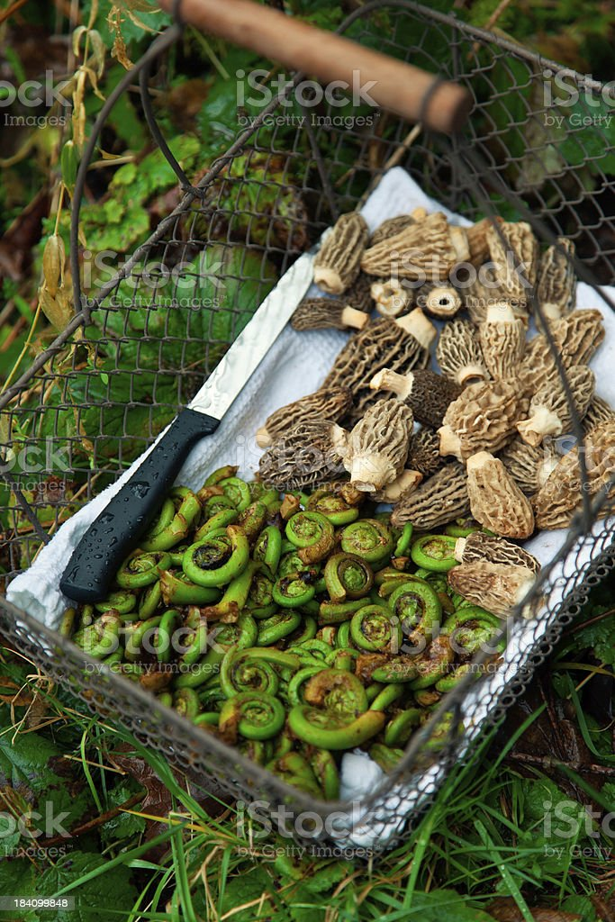 Foraging stock photo