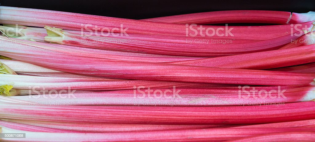 Forced Rhubarb stock photo
