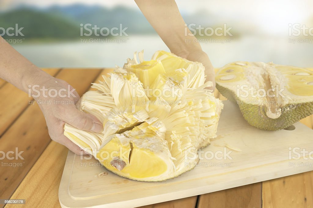 Forcefully turn Jackfruit inside out stock photo