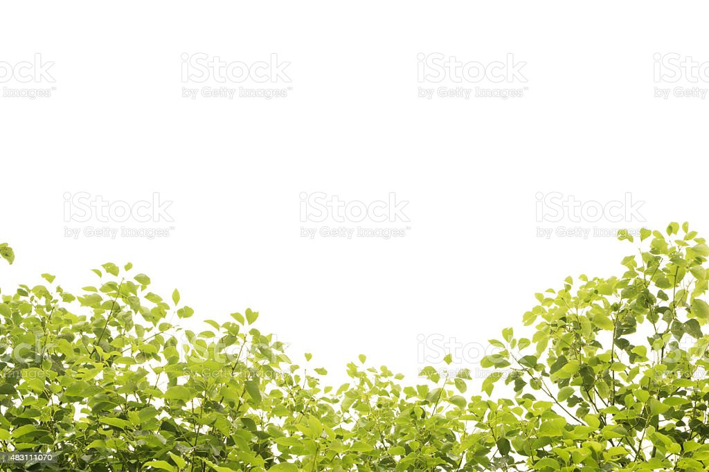 Foreground of Leaves isolated on white stock photo