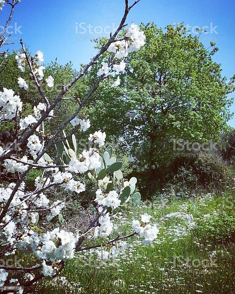 Foreshortened of Mediterranean vegetation. stock photo
