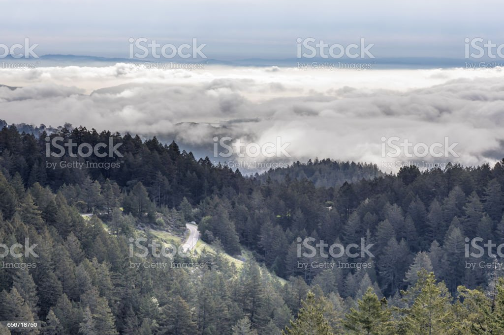 Forest Above The Clouds stock photo
