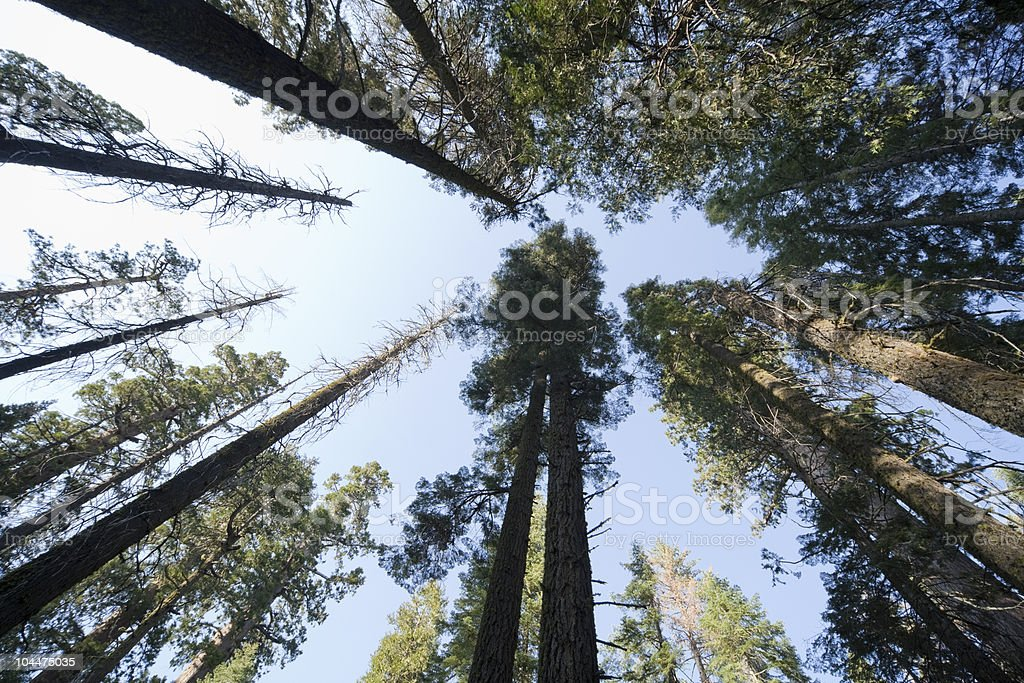 Forest Above Wide Angle royalty-free stock photo