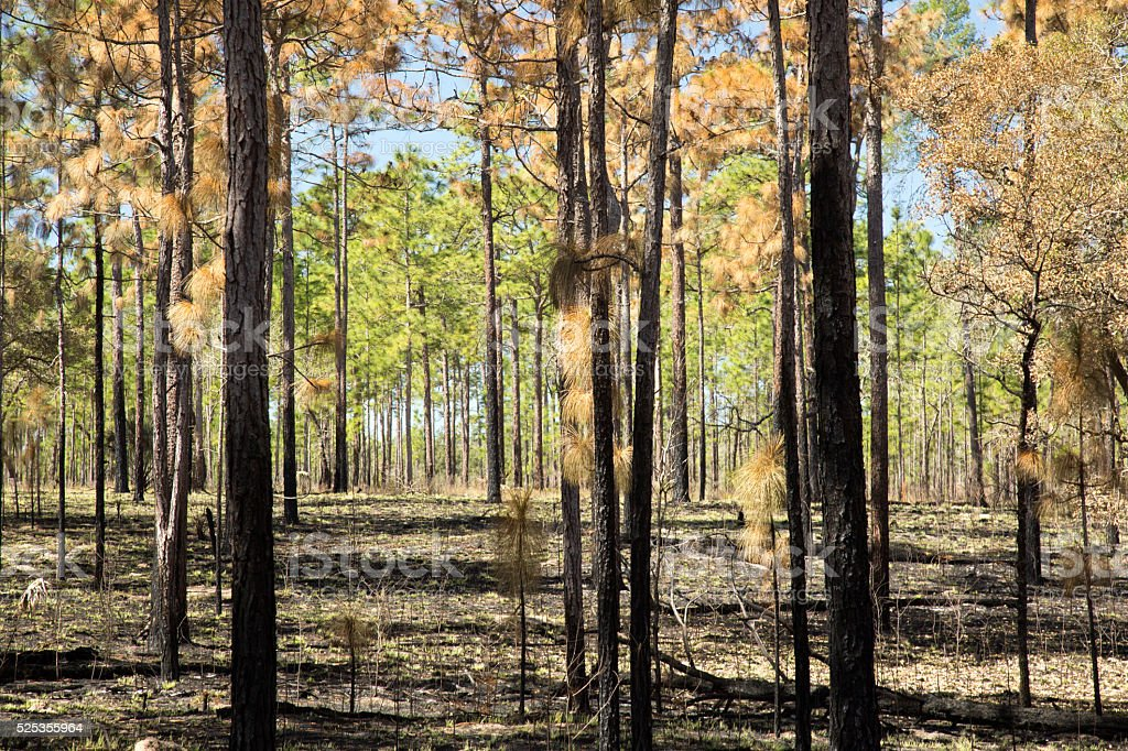 Forest After A Fire With Singed Ground #2 stock photo