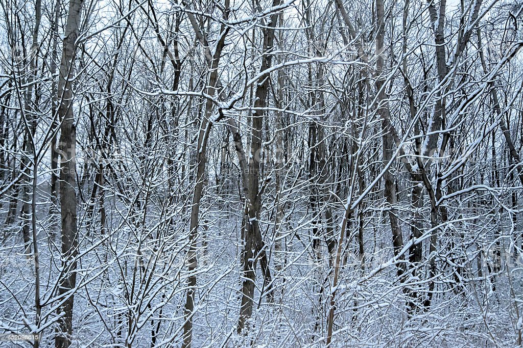 Forest After First Snowfall royalty-free stock photo