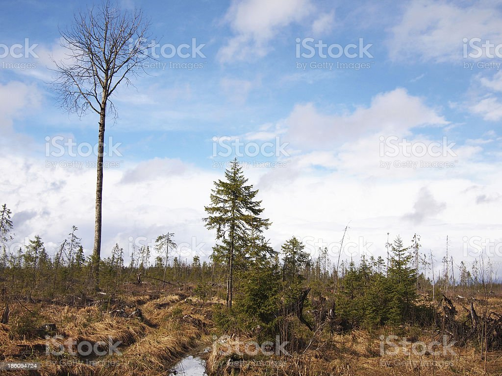 forest after logging royalty-free stock photo