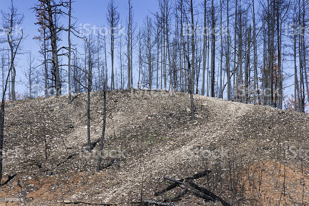 Forest After the Fire royalty-free stock photo