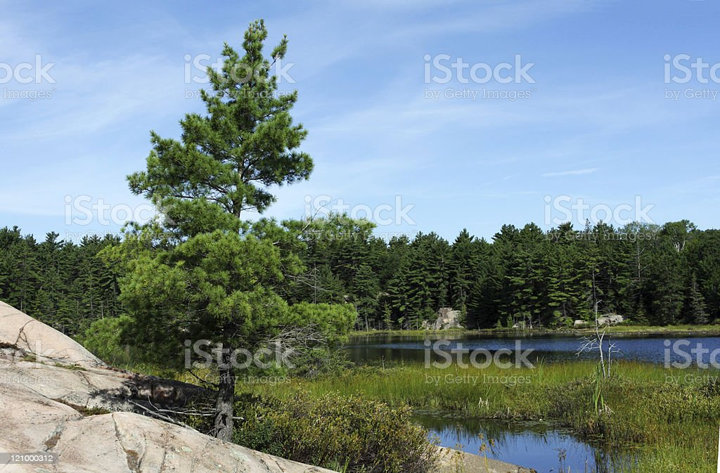 Forest and bog stock photo