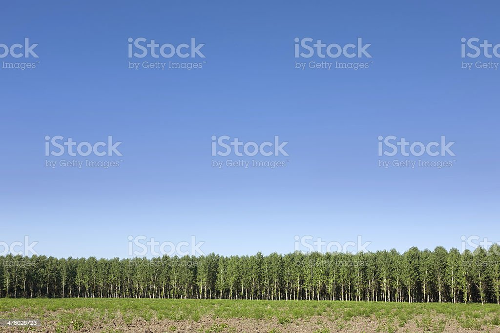 Forest and crystal clear sky stock photo