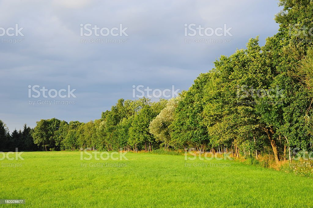 Forest and Field stock photo