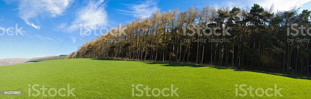 Forest and field royalty-free stock photo