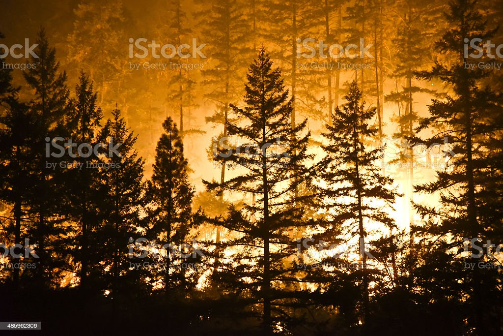 Forest and flames stock photo