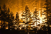 Forest and flames