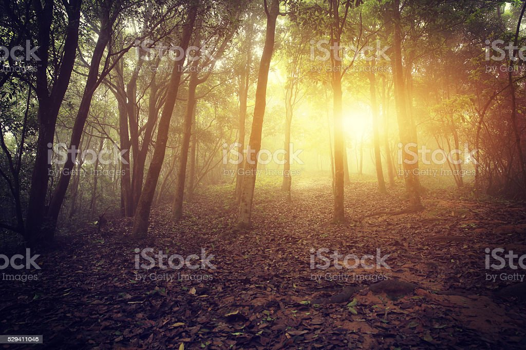 forest and hiking trail in spring fog stock photo