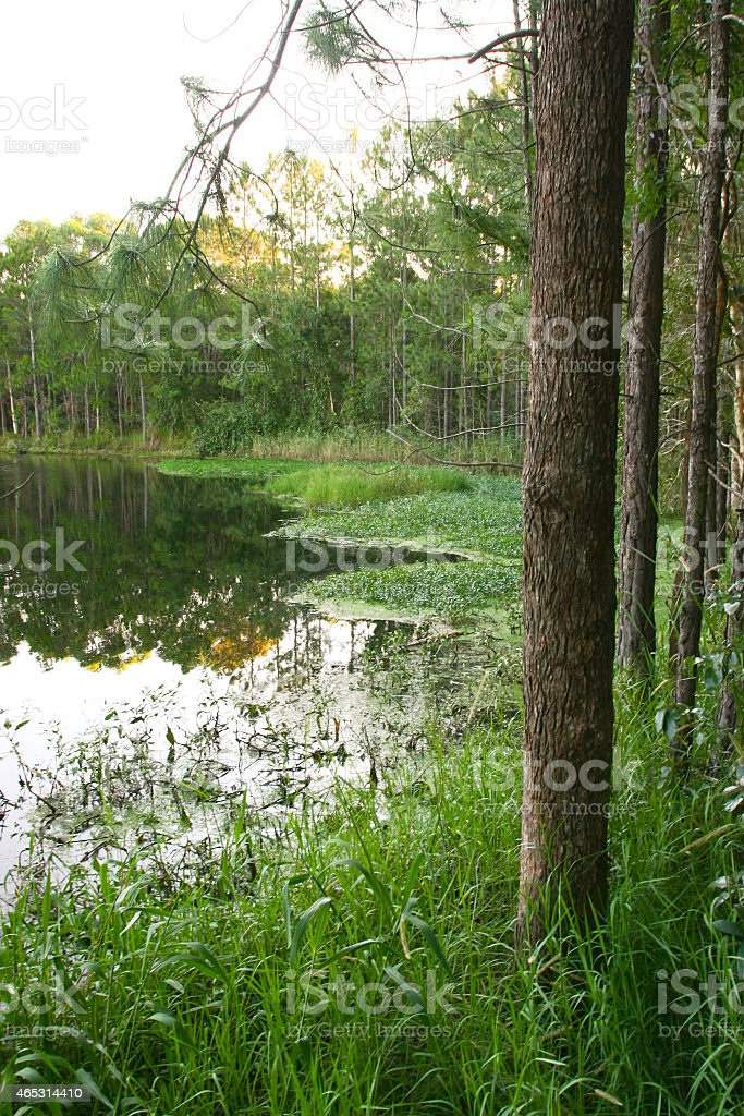 Forest and Lake stock photo