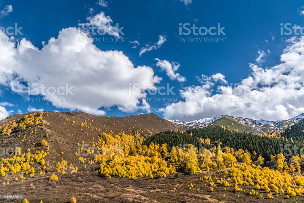 forest and mountain landscape stock photo