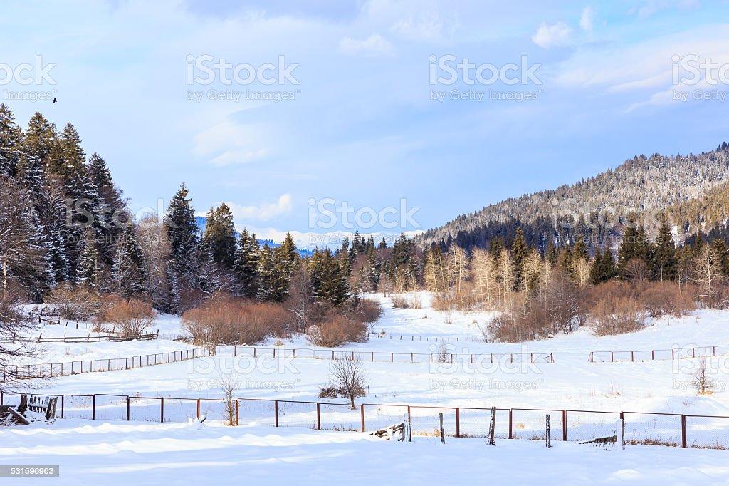 Forest and mountains in Bakuriani, Georgia stock photo