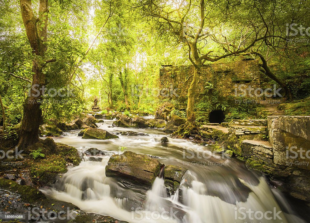 Forest and river landscape on woods royalty-free stock photo