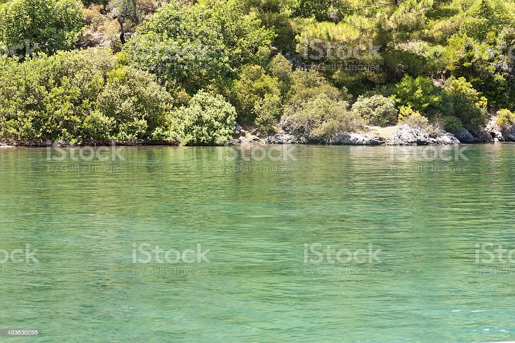 forest and sea, outdoor photo beauty in nature royalty-free stock photo