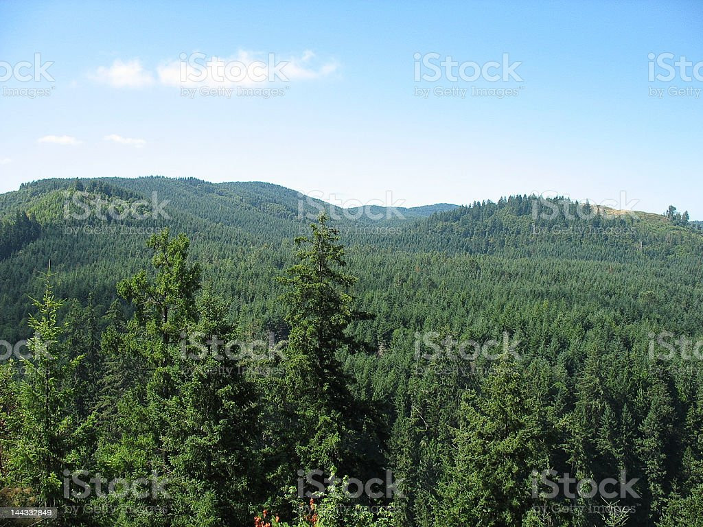 Forest and Sky royalty-free stock photo