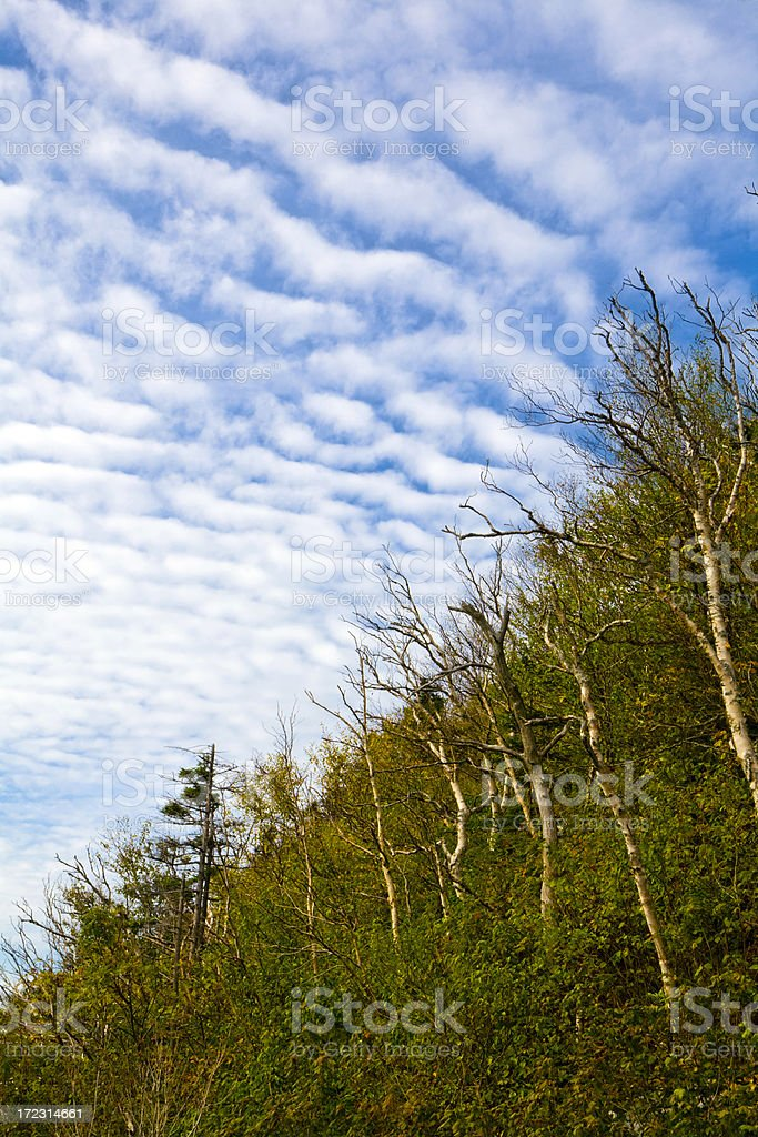 Forest And Sky (Vertical) royalty-free stock photo