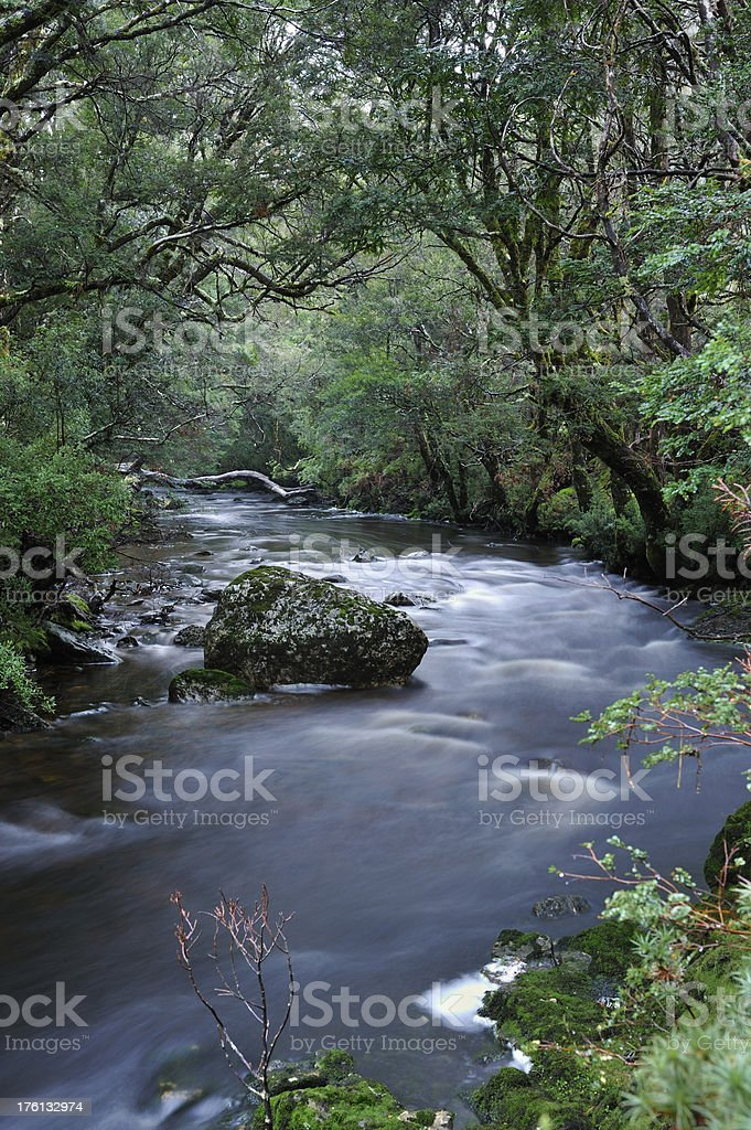 Forest and Stream royalty-free stock photo