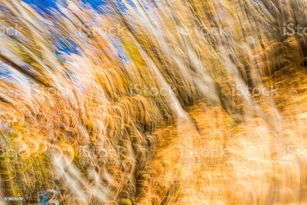 forest at autumn with camera shaking stock photo