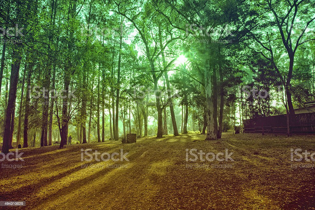 Forest at Irene stock photo