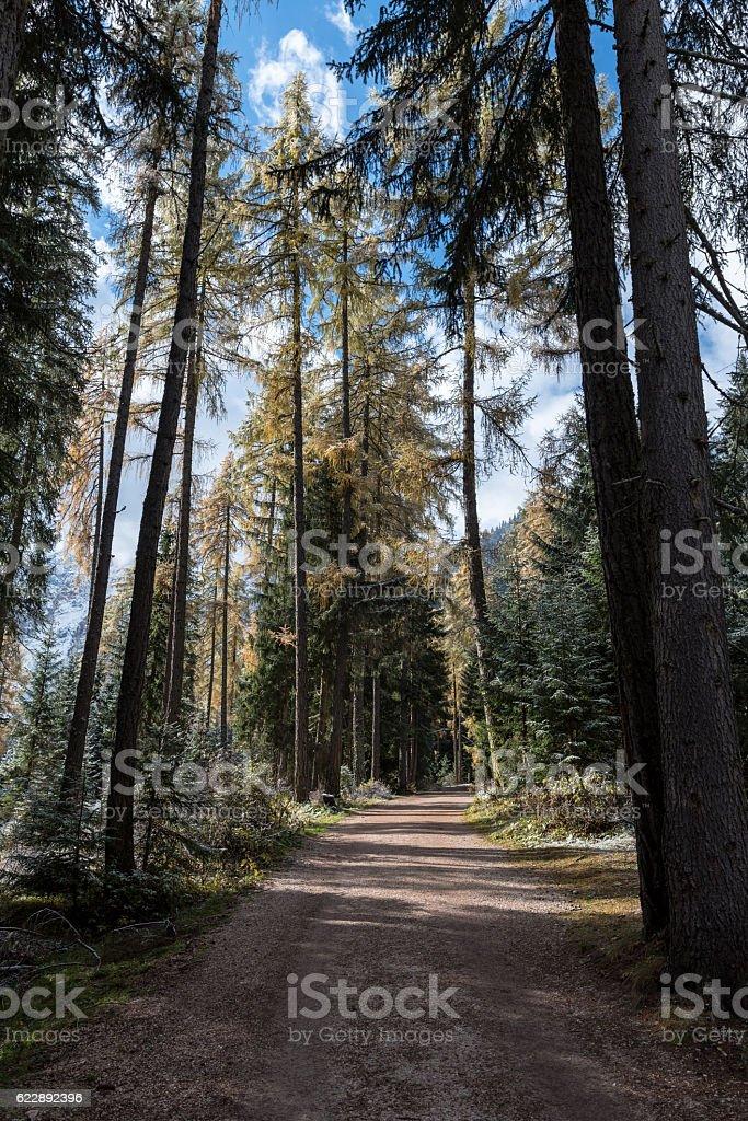Forest at Lago di Braies in Alto Adige stock photo