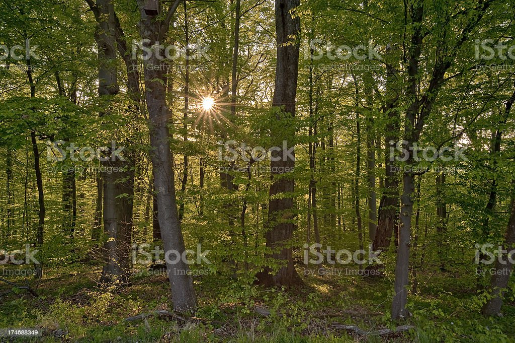 Forest at late afternoon stock photo