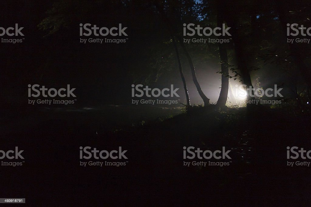 Forest at Night stock photo