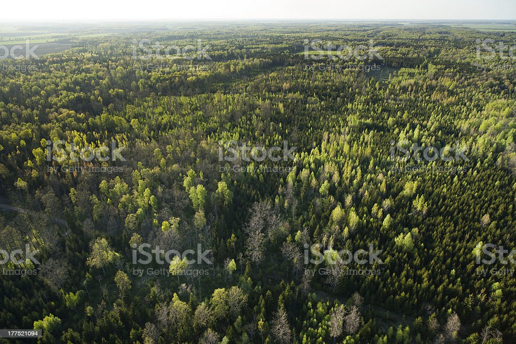 Forest at spring stock photo