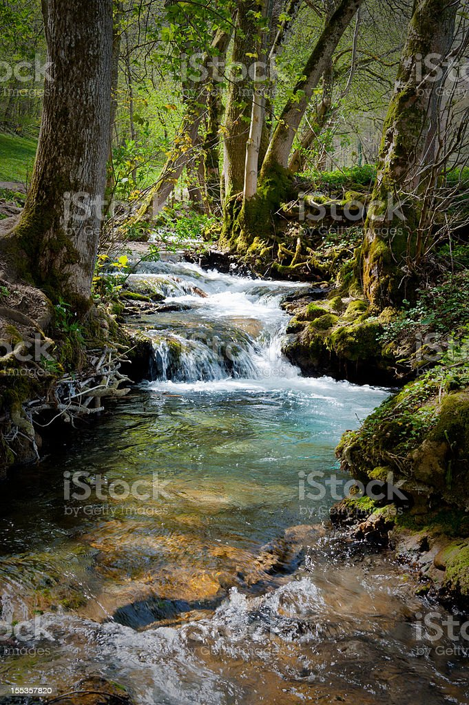 Forest at summertime with creek little cascades lush foliage royalty-free stock photo