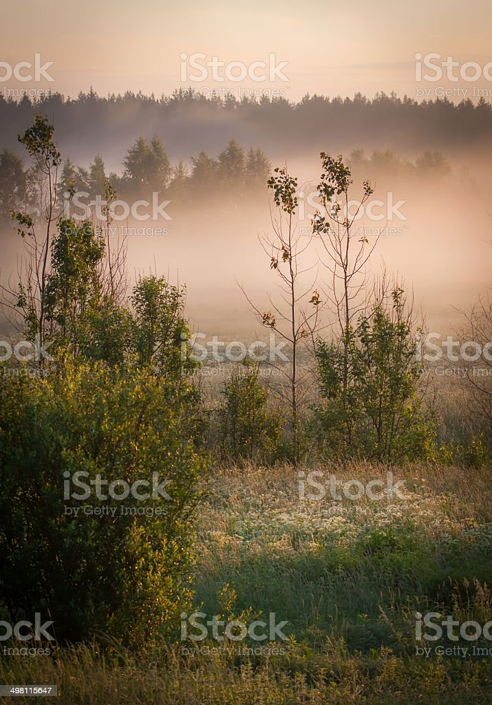 Forest at sunrise royalty-free stock photo