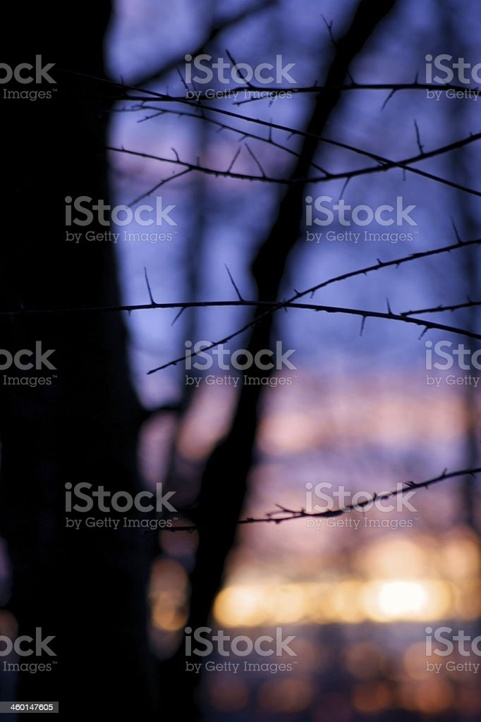 Forest at sunset royalty-free stock photo
