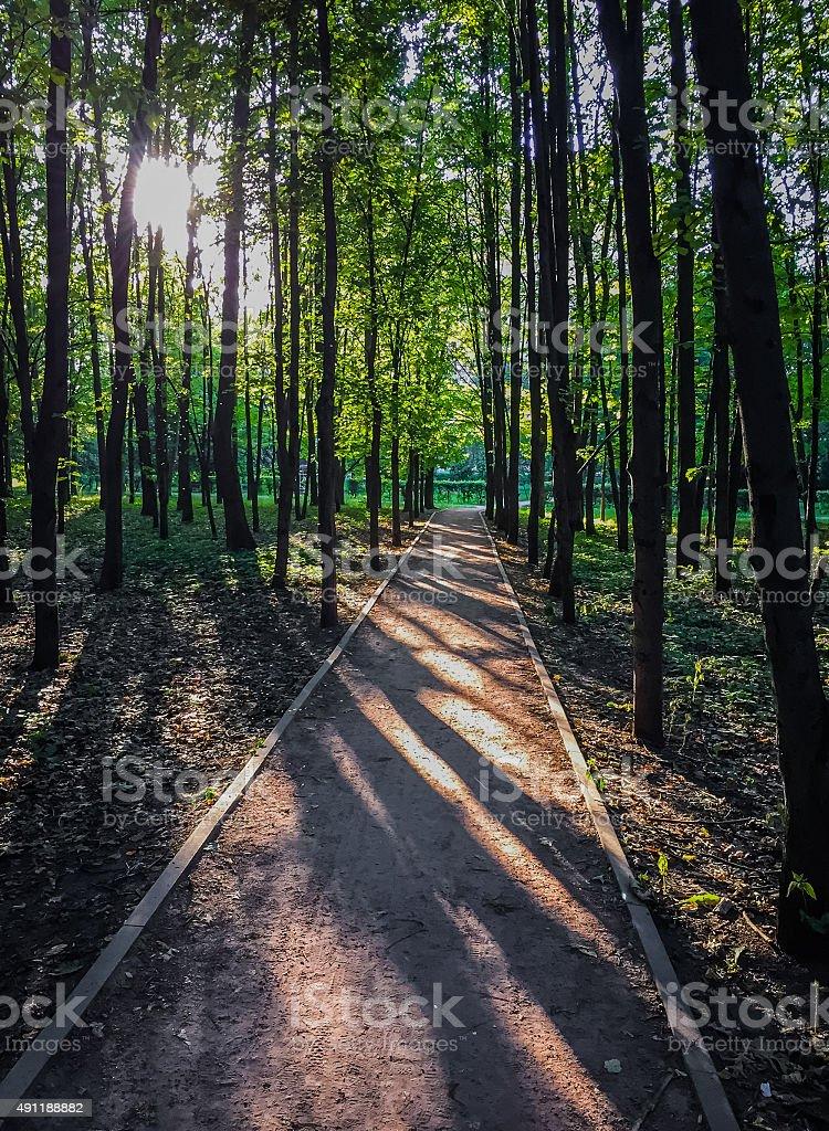 Forêt au coucher du soleil photo libre de droits