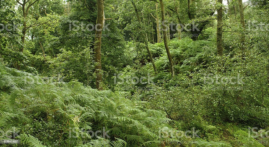 forest at the West Highland Way royalty-free stock photo