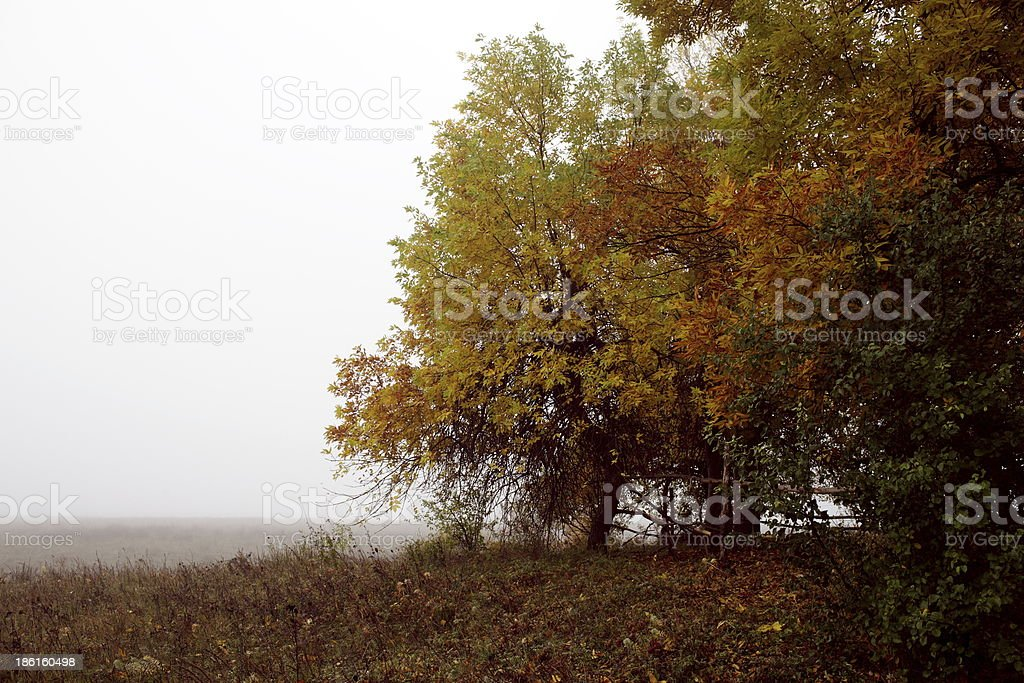 Forest autumn morning royalty-free stock photo