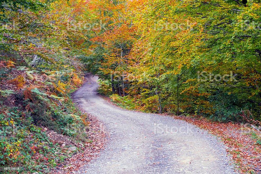 Forest autumn stock photo