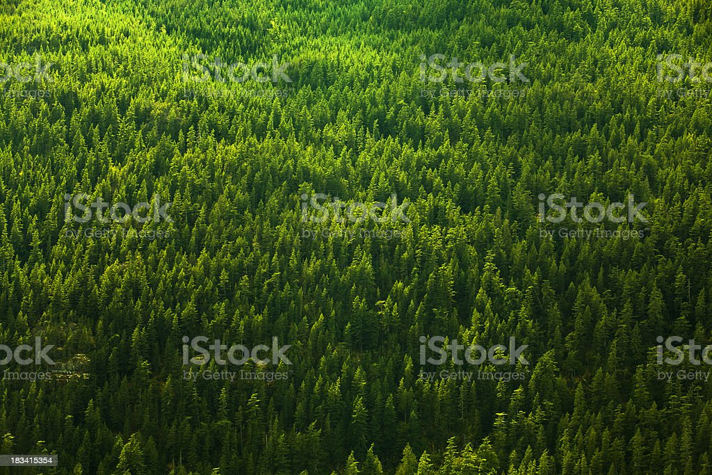 Forest background royalty-free stock photo