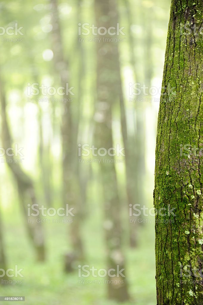 Forest background with bokeh at spring stock photo