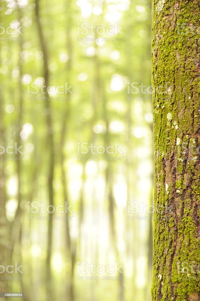 Forest background with bokeh defocused stock photo