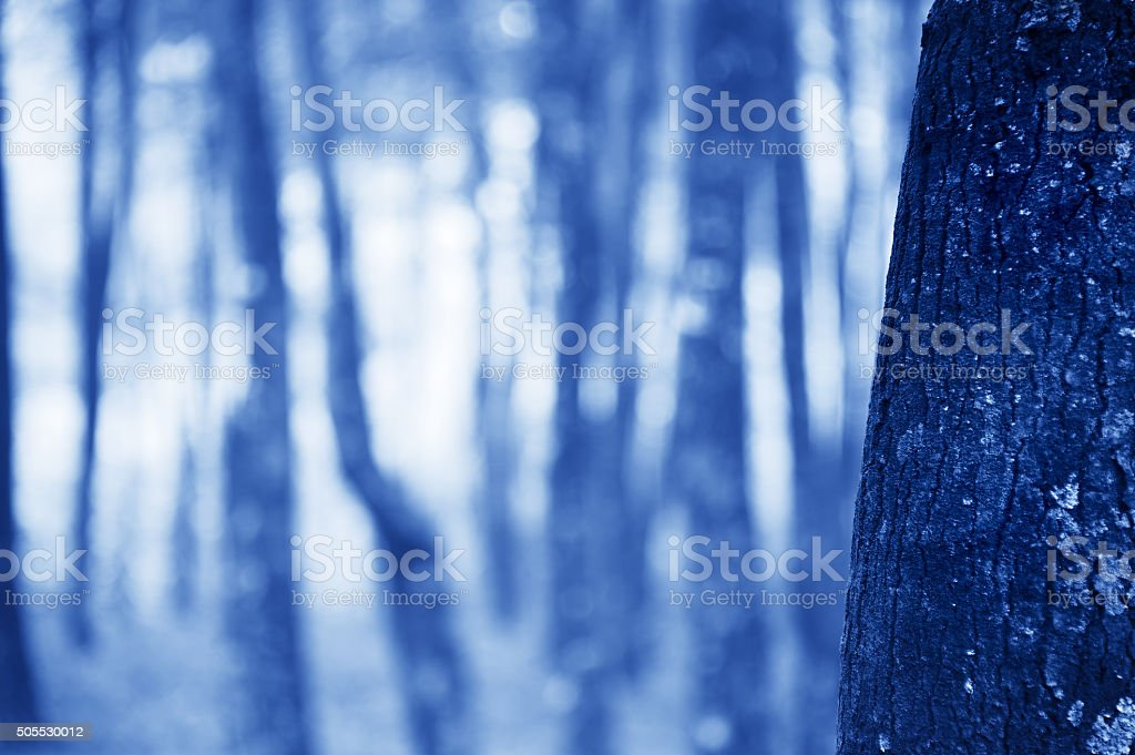 Forest background with bokeh light stock photo