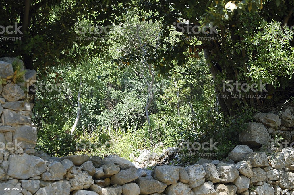 Forest behind the wall stock photo