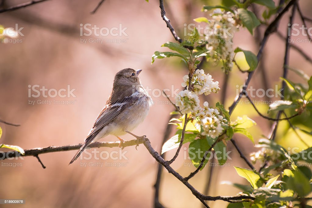 Forest bird stock photo
