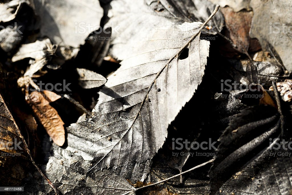 Forest black leaves stock photo