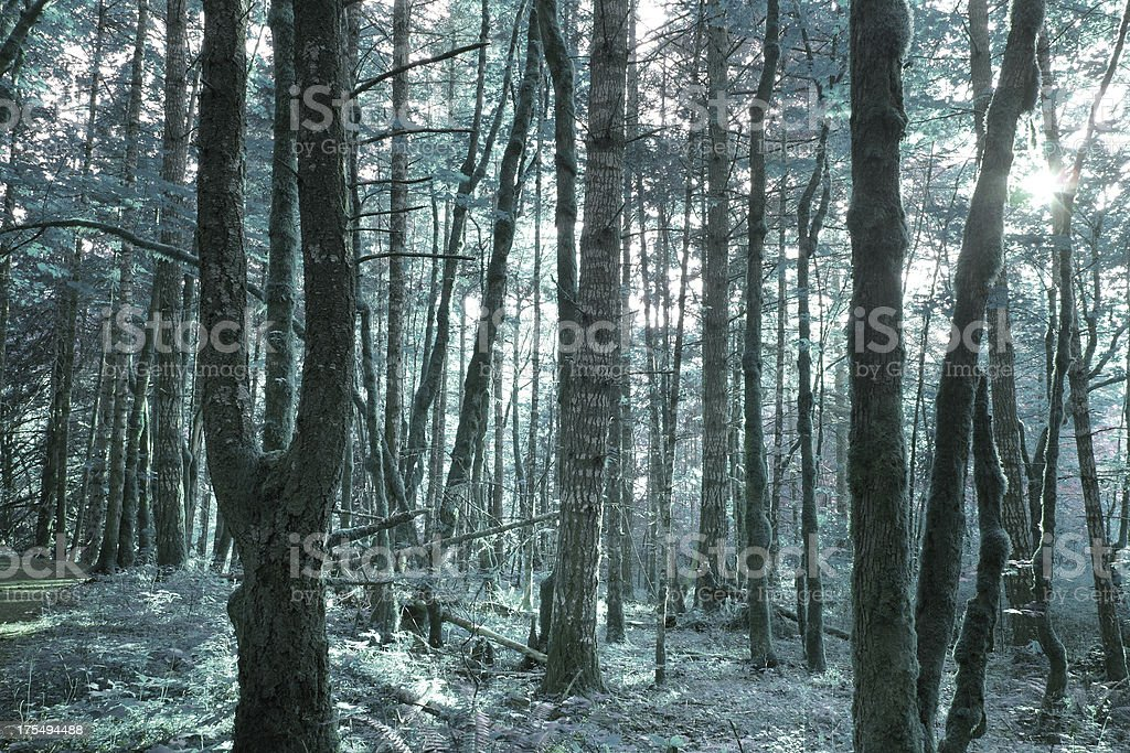 Forest Blue royalty-free stock photo