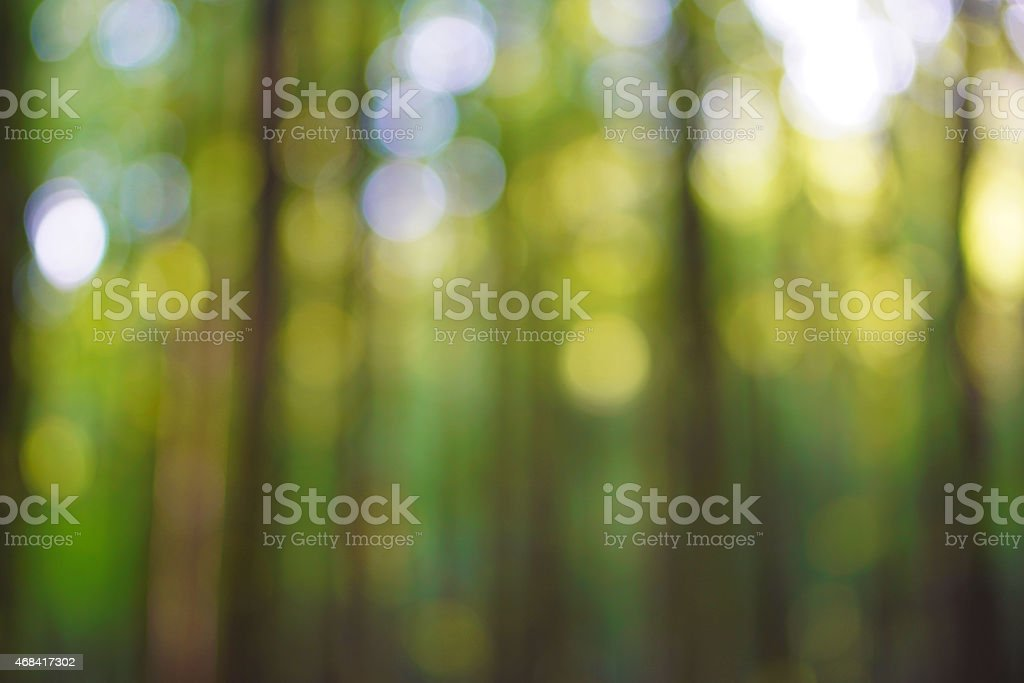 Forest bokeh stock photo